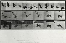 Dive in with the Stanley: Eadweard Muybridge promotional image