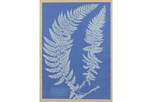 Dive in with the Stanley: Anna Atkins