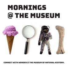 Mornings @ The Museum promotional image
