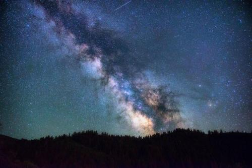 milky way against treeline